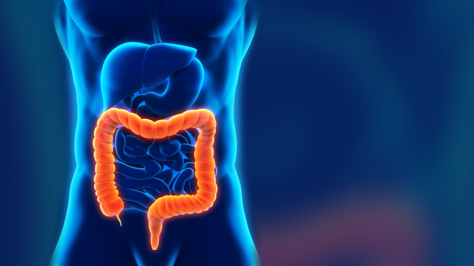 why-the-bacteria-in-your-gut-matters