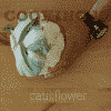 Cooking 101 - How to Cut a Cauliflower